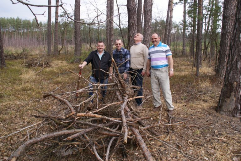 Sadzenie lasu